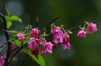枝头上的中国红花朵