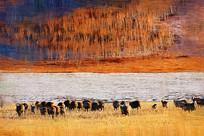 电脑油画《牧场羊群》