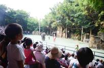 长隆动物园大象表演