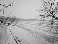 冬雪田地雪原