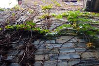 爬满植物的墙壁