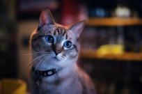 机灵的猫咪