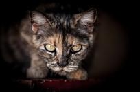 恐怖的猫咪