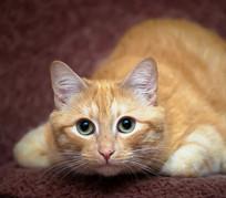 玩耍的猫咪