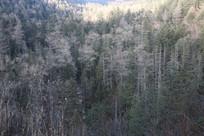 长白山秋天里的地下森林