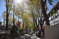 大街上的秋天