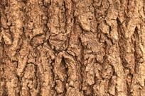 树皮纹理高清图片
