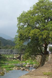 乡村小桥流水大树远山摄影照片