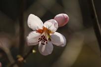 阳光下的五瓣花