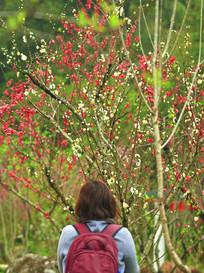 桃花树下的双肩包美女