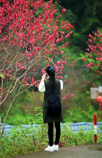 桃花园里面的游客