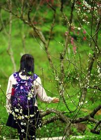 桃花园中赏花记