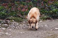 一只可爱的宠物狗