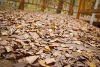 深秋的落叶