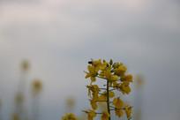 花丛中的蜜蜂