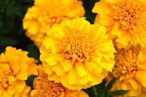 开放的黄花朵