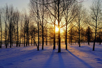 夕阳西下的雪原树林