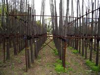 植树造林横构图