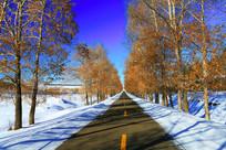 林荫道雪景