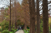 秋天的林间小道