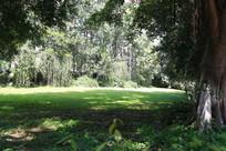 树林的一片绿荫