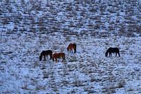 高原冰雪牧场马群