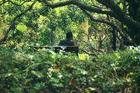 公园树丛下休闲椅上抽烟的中年男子