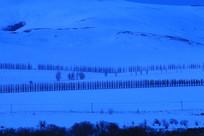 蓝调的雪野农田防护林