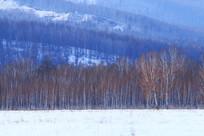 林海雪原白桦林雪景景观