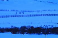 暮色苍茫的雪原防护林