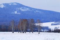 宁静的林海雪原白桦林