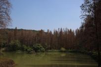围绕湖泊的森林
