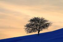 夕照雪原独树