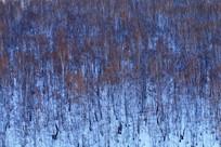 雪原白桦林