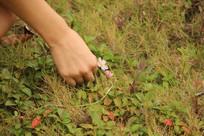 摘小花的手