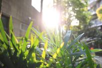阳光下的小草