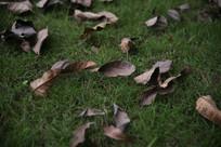 草坪上得树叶