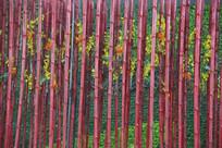 红色竹墙背景素材