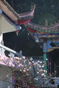 寺庙角落里的一株粉玉兰