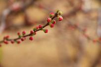 一枝红花俏枝头