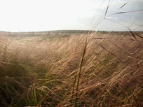 夕阳下的内蒙古草原风景图片