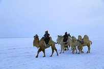 雪原骑骆驼的蒙古族牧民