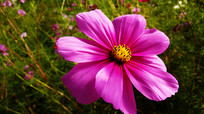 一朵田野里的太阳花