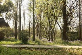 春天中的公园