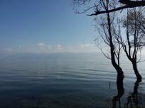 洱海环湖西路上的浅滩柳树林风光