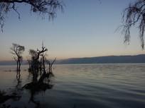环湖西路旁的洱海浅滩树林
