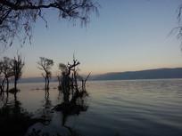环湖西路旁的洱海浅滩树林景色