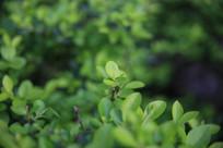 绿色树叶背景图