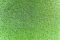 绿色植物背景墙