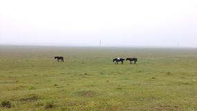 内蒙古草原三匹马图片